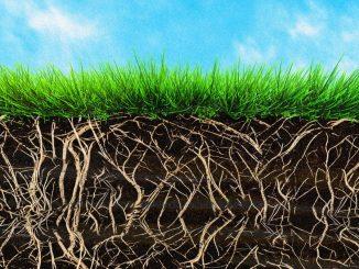 باتریهای بیولوژیک، رقیبی تازه در تولید انرژی تجدیدپذیر